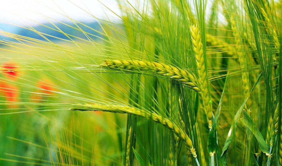 agri-1200x708.jpg